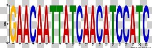 Sequence Logo Line Font PNG