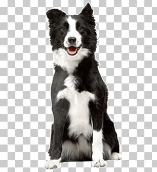 Cat Food Border Collie Puppy Veterinarian PNG