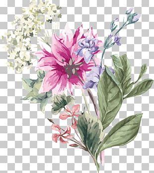 Hydrangea Flower Stock Illustration Illustration PNG