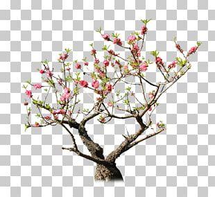 Peach Tree Rock Garden PNG