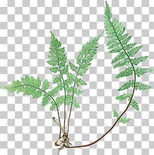 Canvas Graphic Arts Fern Leaf PNG