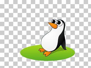 King Penguin Antarctica Bird Cartoon PNG