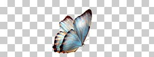 Butterfly Transparency And Translucency PNG