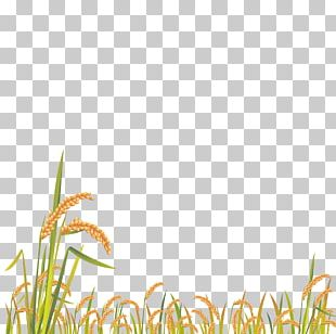 Cartoon Grass PNG