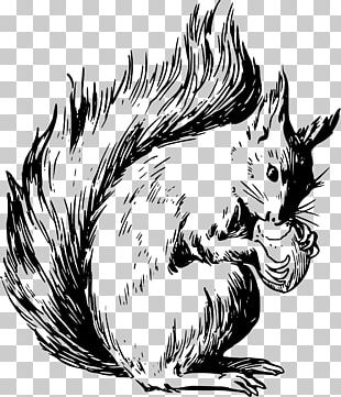 Eastern Gray Squirrel Coloring Book American Red Squirrel PNG