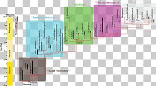 Homo Sapiens Hominina Phylogenetic Tree Phylogenetics Human Evolution PNG