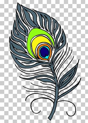Feather Asiatic Peafowl PNG