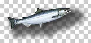 Sardine Coho Salmon Fish Products Oily Fish Anchovy PNG