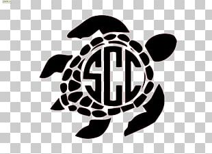 Sea Turtle Drawing PNG