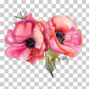 Watercolor Painting Stock Photography Poppy PNG