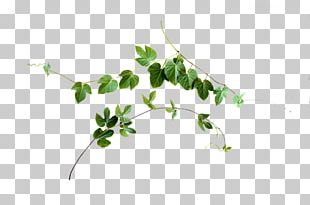 Leaf Vine Plant Stem PNG