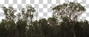 Tree Line Forest Shrub PNG