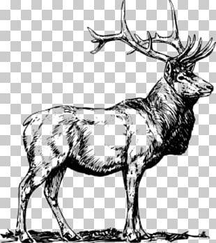 Elk Deer Moose PNG
