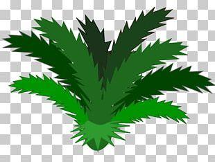 Jungle Plant Rainforest PNG