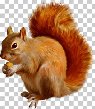 Tree Squirrel Dog Mexican Gray Squirrel PNG