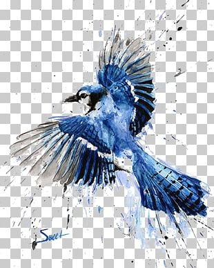 Bird Blue Jay Watercolor Painting Art PNG