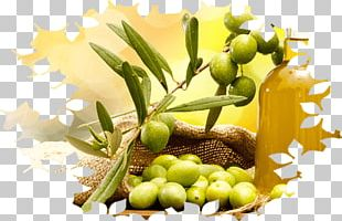 Olive Oil Cooking Oils PNG
