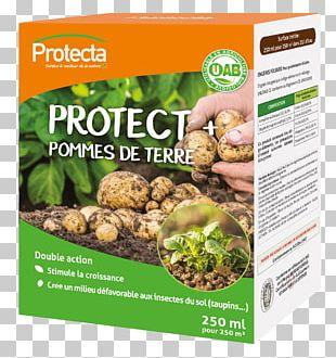 Vegetarian Cuisine Leaf Vegetable Potato Food PNG