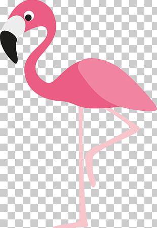 Flamingo Cartoon PNG