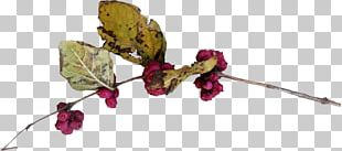 Twig Cut Flowers Plant Stem Leaf Flowering Plant PNG