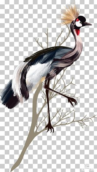 Crane Bird Feather PNG