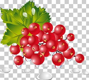 Vegetable Fruit Berry Food Dish PNG