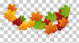 Autumn Leaf Color Autumn Leaves PNG