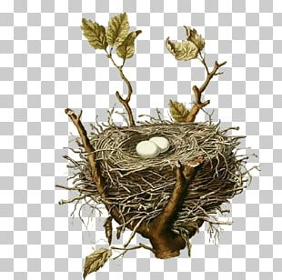 Bird Nest House Sparrow Birds PNG