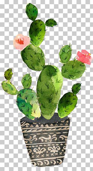 Cactaceae Watercolor Painting Succulent Plant PNG