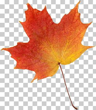 Drawing Autumn Leaf Color PNG