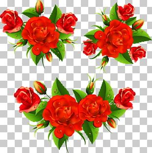 Flower Rose Red PNG