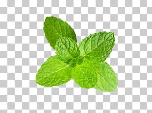 Peppermint Clipping Path Stock Photography Mentha Spicata PNG