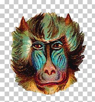 Mask Animal Monkey.digital PNG