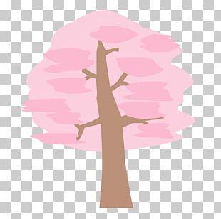 Illustration Spring Cherry Blossom PNG