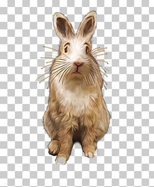 Domestic Rabbit Hare Whiskers Art PNG