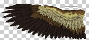 Bald Eagle Drawing Bird Golden Eagle PNG