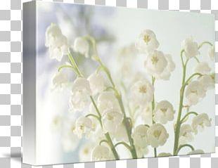 Flower Floral Design Photography Wedding Lilium PNG