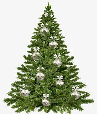 Christmas Trees Element PNG