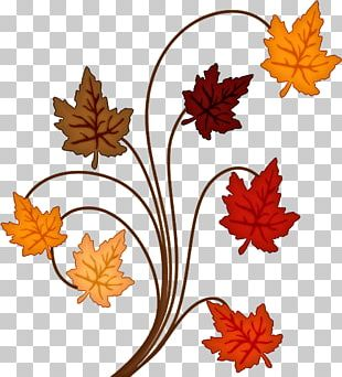Cut Flowers Maple Leaf Plant PNG