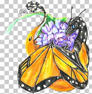 Monarch Butterfly Ancient Greece Greek Mythology PNG