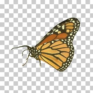 Monarch Butterfly Insect Symbol Inachis Io PNG