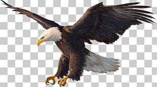 Bald Eagle Drawing PNG