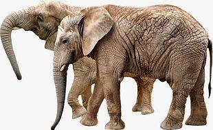 Elephant PNG