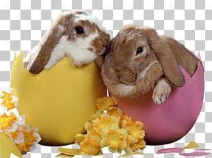 Easter Bunny European Rabbit Leporids PNG