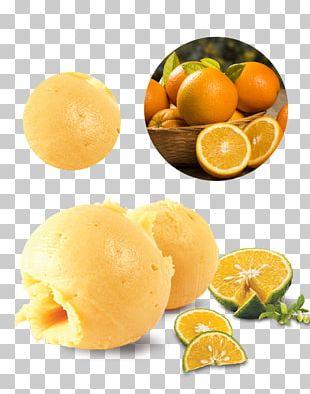 Ice Cream Vegetarian Cuisine Công Ty Sản Xuất Kem Đức Phát Công Ty Phân Phối Kem Ký Cao Cấp Cung Cấp Kem Ý Gelato PNG