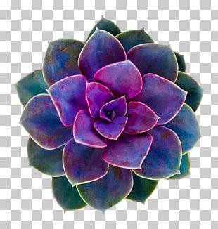 Succulent Plant Flower Rose Desktop PNG