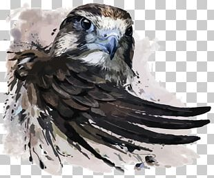 Watercolor Painting Falcon Illustration PNG