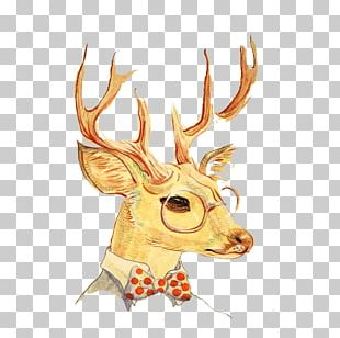Deer Cartoon PNG