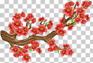 Cherry Blossom Portable Network Graphics Flower PNG