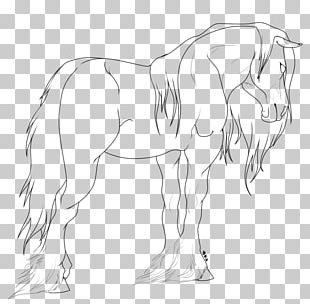 Clydesdale Horse Fjord Horse American Miniature Horse American Paint Horse Shire Horse PNG